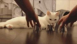 You can't fool me human! -