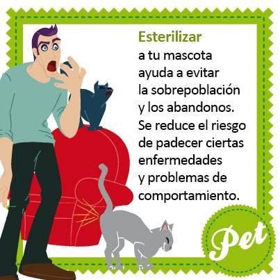 La esterilización evita problemas y es indicativo de una #TenenciaResponsable. Tu mascota va a ser igual de feliz y las protectoras, siempre saturadas, lo agradecerán. Infórmate en tu veterinario.