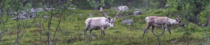 Lapland nature tours and treks