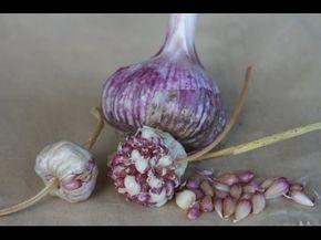 Огород без хлопот Выращиваем чеснок из бульбочек Подзимняя посадка бульбочек - YouTube