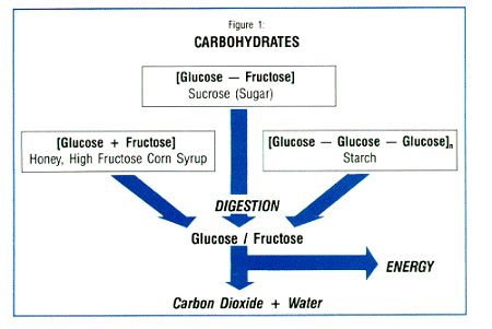 the functions of fiber in the human body The role of elements in the human body: carbon the human body carbon makes up 18% of the human body sugars in the body like glucose hold carbon elements and carbon is ingested into the body by eating carbohydrates macromolecules.