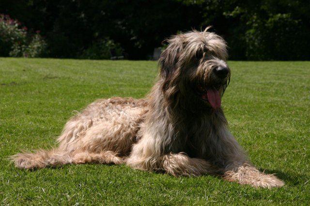 Revier für Hunde - Bildergalerie, Fotosm, Impressionen aus dem Revier für Hunde - Gäste