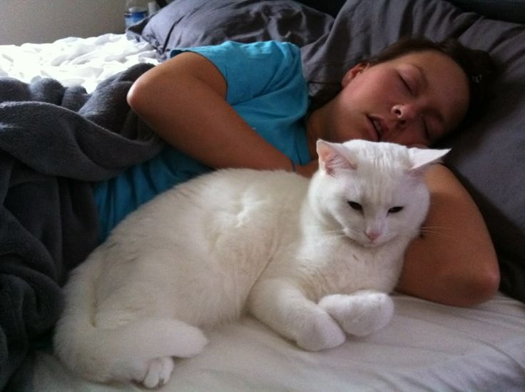 It is not easy to keep your cat out of your bed, and especially if one of the following reasons is true.