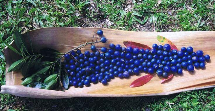 5 Bush Tucker Plants for Your Small Garden