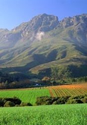 Stellenbosch is 43km's up the road, and is one of the most well-known of our wine producing regions.