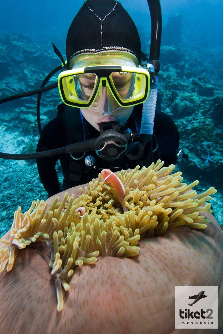 Pulau Samalona merupakan salah satu tempat diving & Snorkelling terbaik  yang  berjarak sekitar 6,8 kilo meter dari kota #Makassar