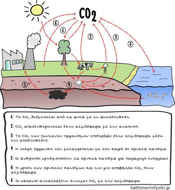 ο κύκλος του άνθρακα..και η κλιματική αλλαγή http://www.kathimerinifysiki.gr/2015/08/pagkosmia-thermansi-klimatiki-allagi.html
