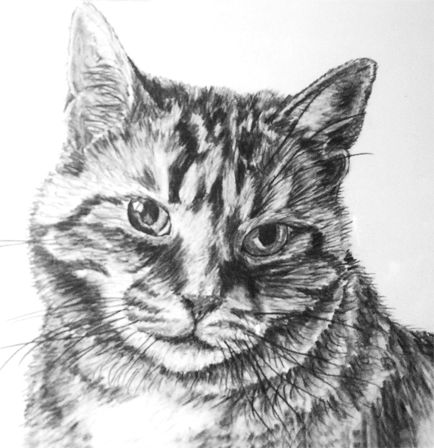 Awesome kitty drawing! ) kitty cat sketch drawing