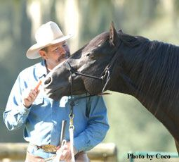 Build the relationship with your horse in 10 minutes a day. I love his training methods.. (I swear this horse is SMILING!)