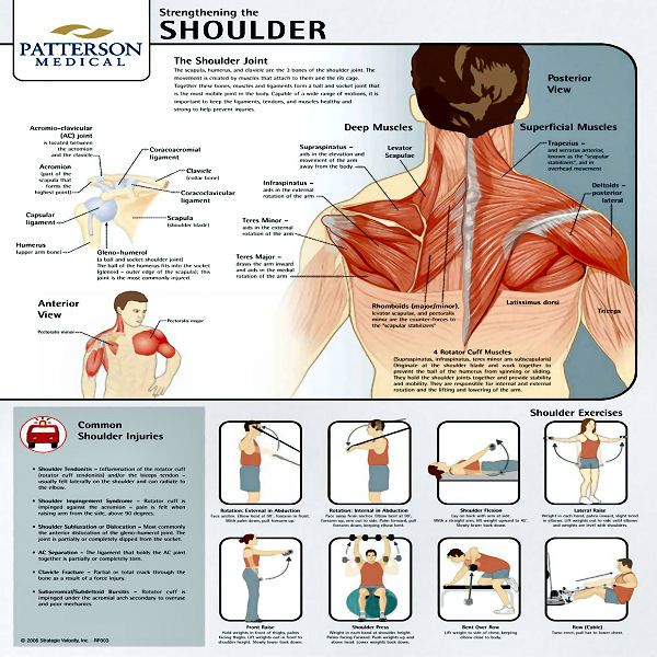 Shoulder Strengthening Exercises | Chart Strengthening The Shoulder Joint - Mobility Shop
