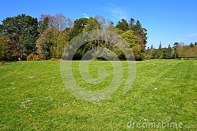 Green grass on park during spring