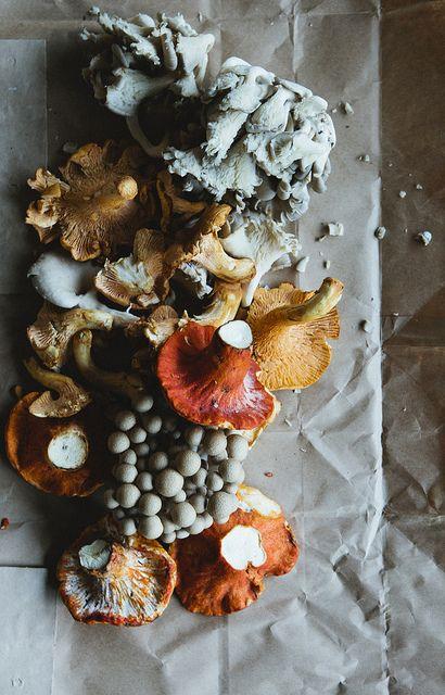 mushrooms Nicole Franzen Photo, via Flickr