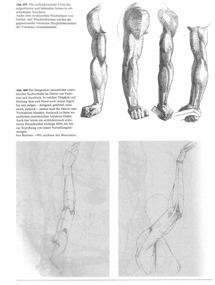 38 best Anatomy images on Pinterest | Fitness exercises, Workouts ...