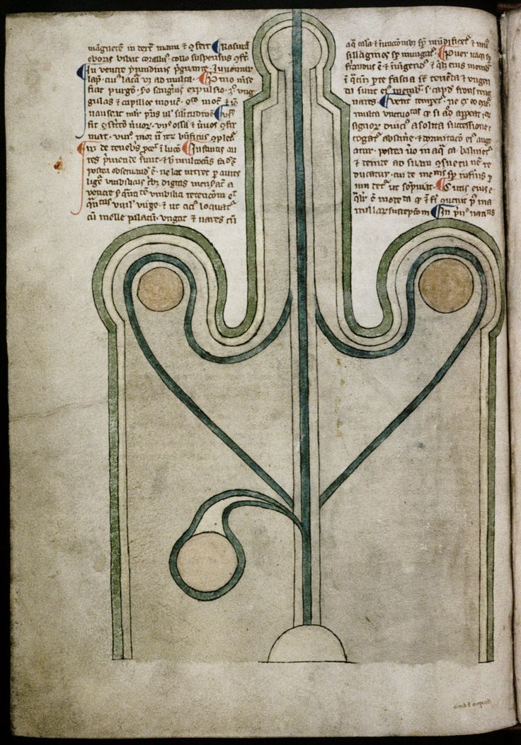male anatomy     medical writings, England ca. 1292.     Bodleian, MS. Ashmole 399, fol. 24v