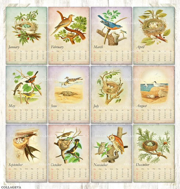 Bird nest egg Digital Cards, ACEO ATC Tag Label, 2017 Monthly Calendar Pdf & Jpeg, Printable Vintage Images Owl Bluebird Swallow (C017-17) by collageva on Etsy