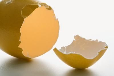 Whether you have a dog, a cat or both, using ground eggshell is an easy and highly nutritious approach to calcium supplementation. Dogs and cats alike will benefit from the natural nutrients found in ...