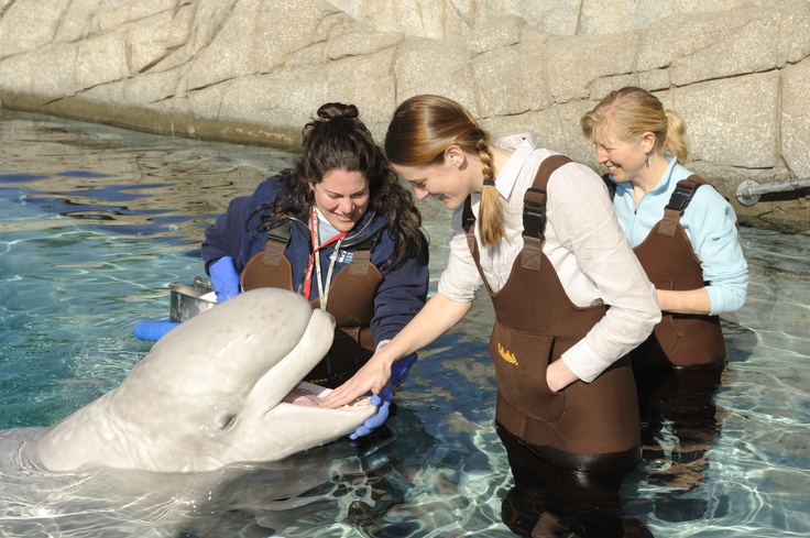 One-of-a-kind opportunities to meet and interact with your favorite marine animals.