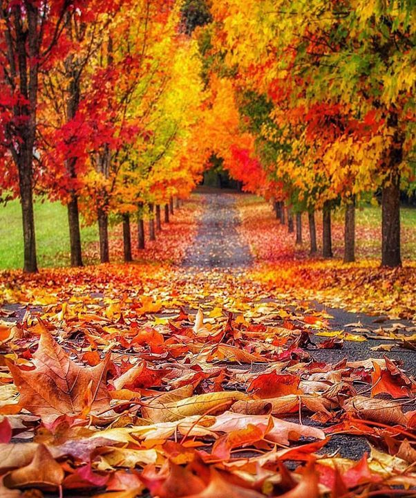 Fall Pics Wallpaper: My Favourite Things: Autumn/Fall