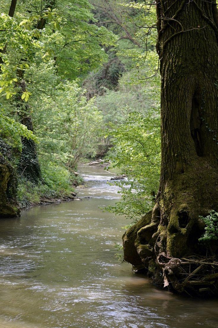 Gáti Erika Ébredő természet A szeszélyes áprilisi időben, a természet gyorsan tud regenerálódni. Minden élénk zöld, friss a levegő, és amit nem lehet lefényképezni, az a madarak csicsergése. Ez vár bennünket a Gaja-patak mentén. Több kép Erikától: www.facebook.com/erika.gati.3