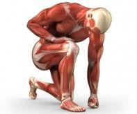 Muskelaufbau ist nicht schwierig! Es gibt Methoden, die seit vielen Jahren für Hunderttausende funktionieren. Als Erstes solltest du die 10 Wahrheiten des Muskelaufbaus verinnerlichen. Die 10 Wahrheiten des Muskelaufbaus Als Natural musst du stärker werden, um Muskeln