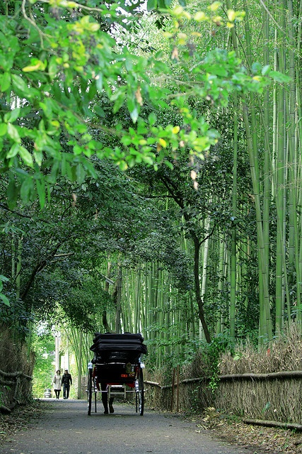 Japanese rickshaw in bamboo forest in Kyoto, Japan