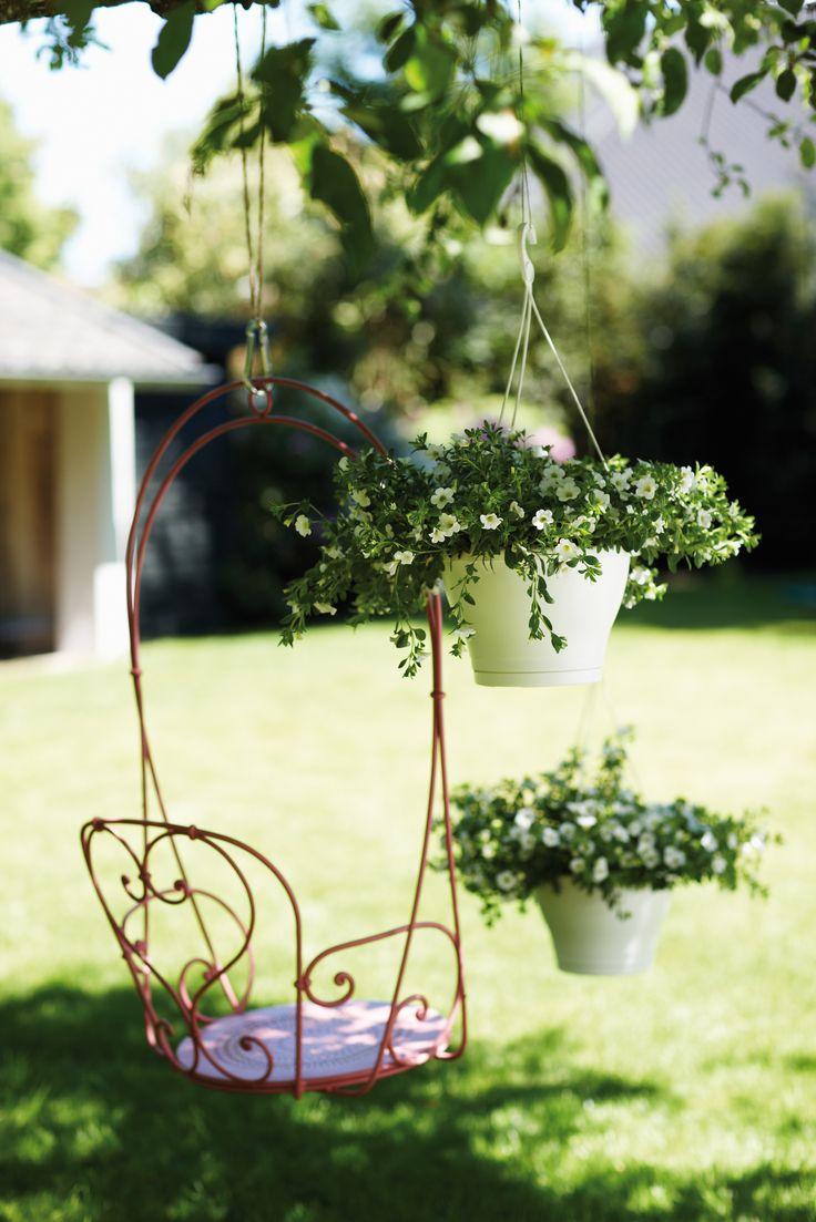 173 fantastiche immagini su piante da giardino su for Piante basso fusto da giardino