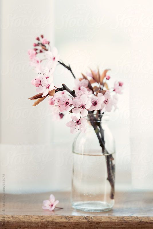 Cherry blossom on a window sill by RuthBlack | Sto…