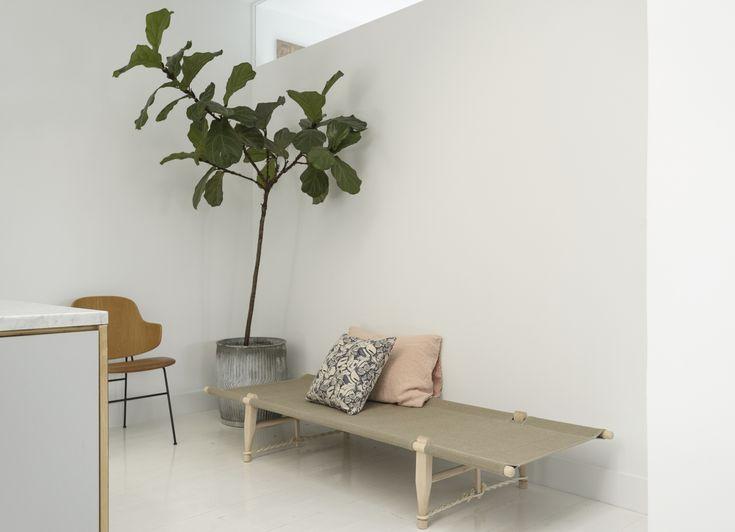 Die besten 25+ Fig leaf tree Ideen auf Pinterest Geige Blatt - grose wohnzimmer pflanzen