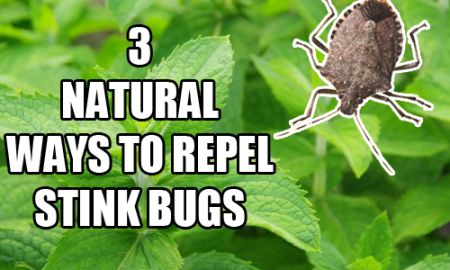 3 Ways To Naturally Repel Stink Bugs