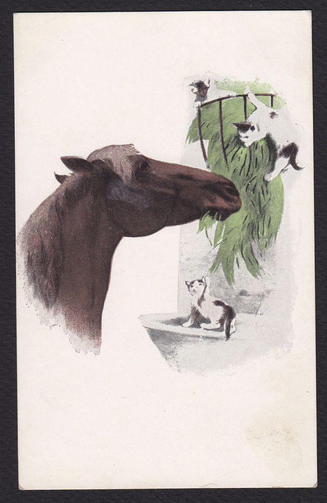 Horse-Cats-Kittens-Illustrated Art-Antique Postcard