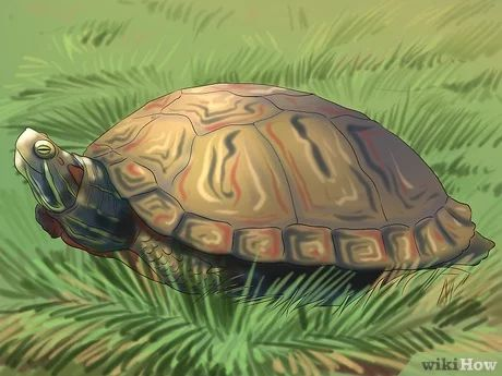 how to clean a turtle tank red eared slider