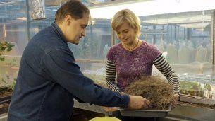 Jíchy — Kouzelné bylinky — Česká televize