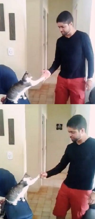 Cool Cat Gives Owner Smoothest High Five, Fist Bump (VIDEO) #cool #cat #kitten #pets #cats