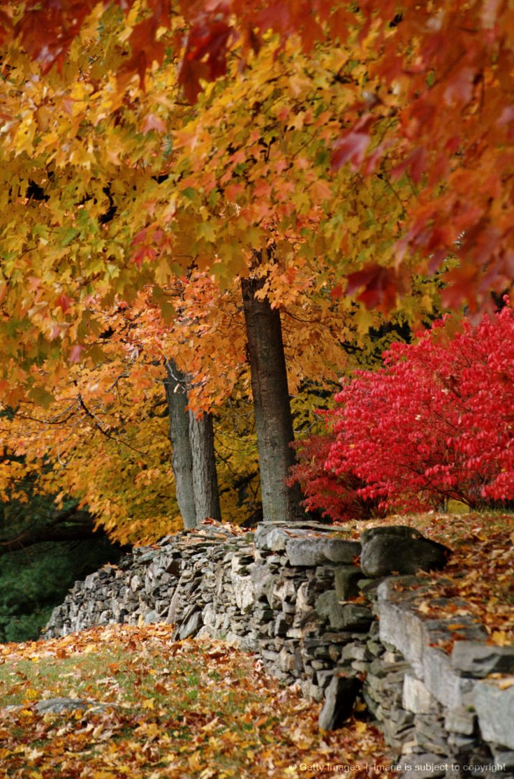 124 Best #FindFallFaster In Connecticut Images On Pinterest