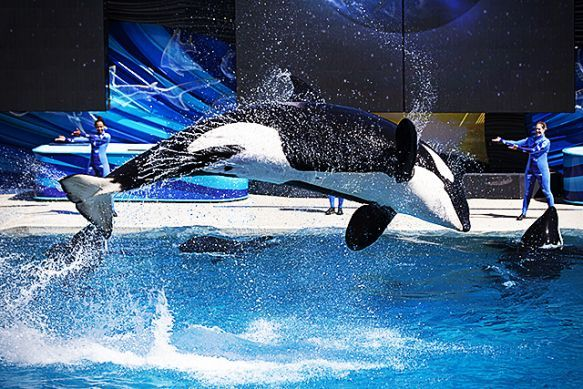 Will SeaWorld's Financial Woes Force It to Free the Whales? | TakePart