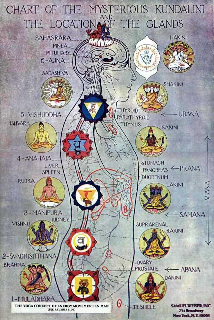 Chart of the mysterious Kundalini and the location of the glands