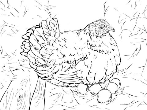 Hen Laying Eggs Coloring Page Embroidery Patterns