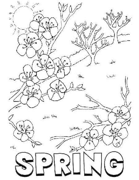 Spring Blossom Flower Coloring Pages WORK