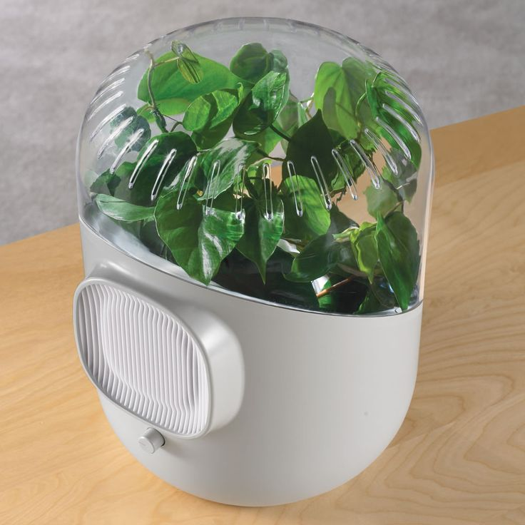 The Only Botanical Air Purifier - Hammacher Schlemmer.  Put a houseplant inside and  the botanical air purifier removes common household VOCs and recirculates clean air into your home.