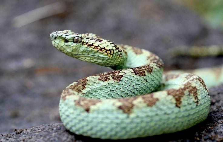 snake - HD1600×1023