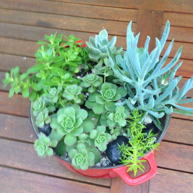 No longer fit-for-purpose Le Creuset pot repurposed as a succulent planter