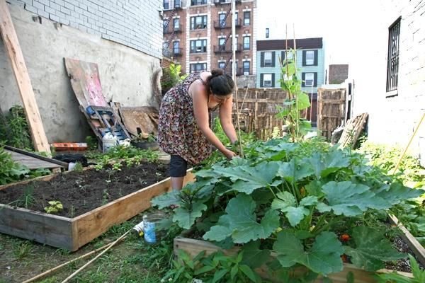 Rooffarmer Italian veggies in an urban garden - dakboerin