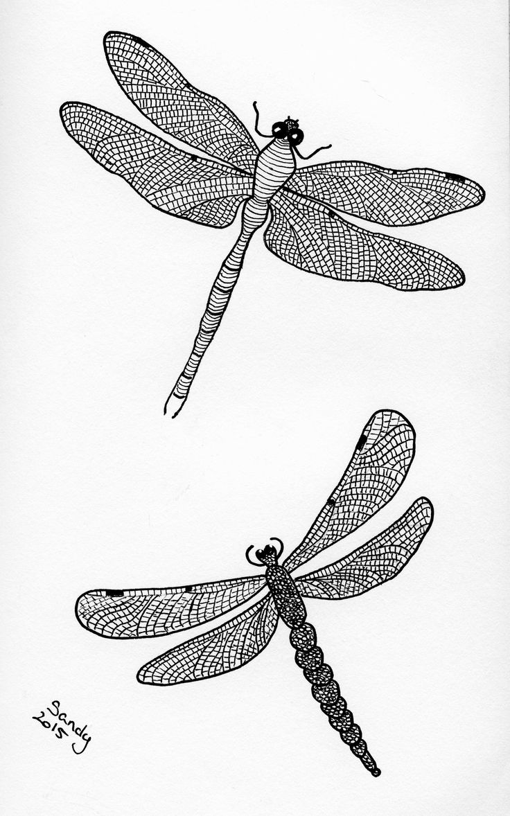 Dragonflies Zentangle by Sandy Rosenvinge Lundbye.
