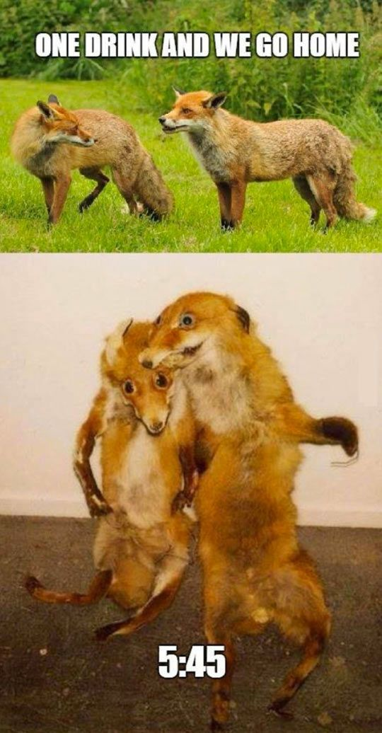 Funny One Drink And We Go Home Foxes