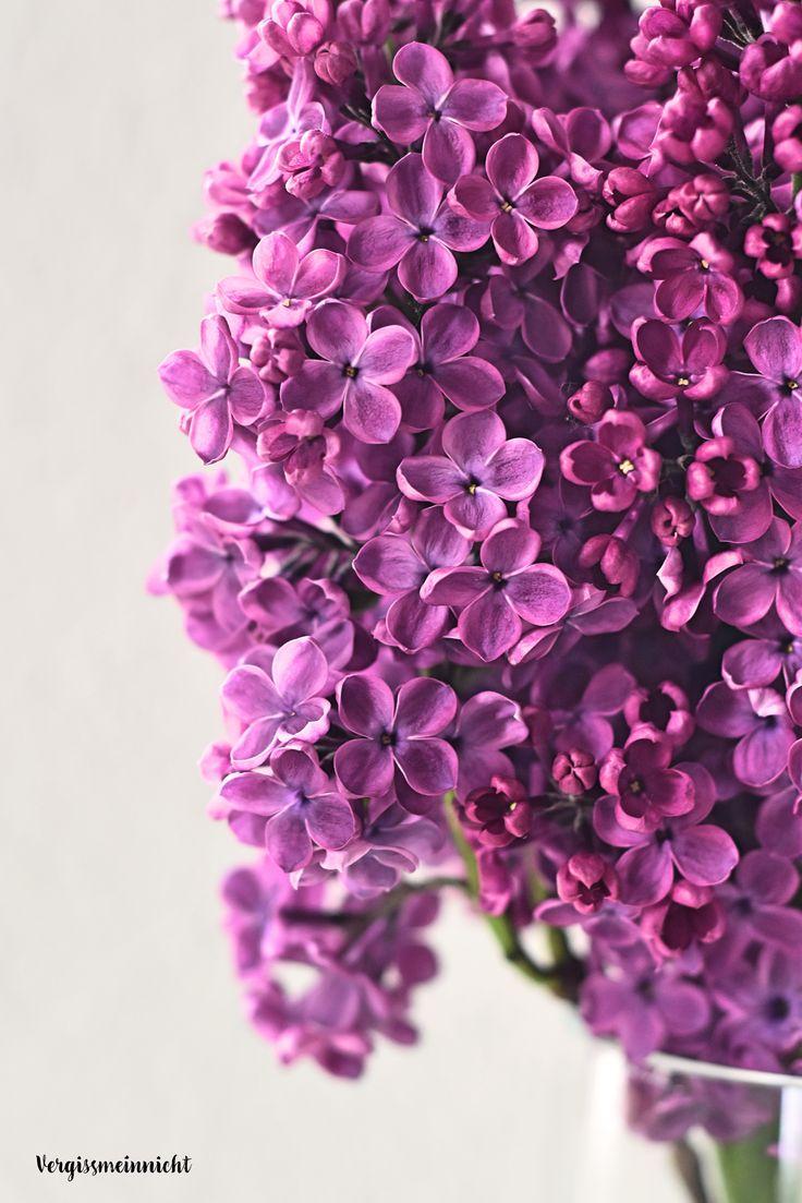 Die 25+ Besten Ideen Zu Flieder Auf Pinterest | Lila Blüten ... Flieder Farben Arten Fakten Pflege