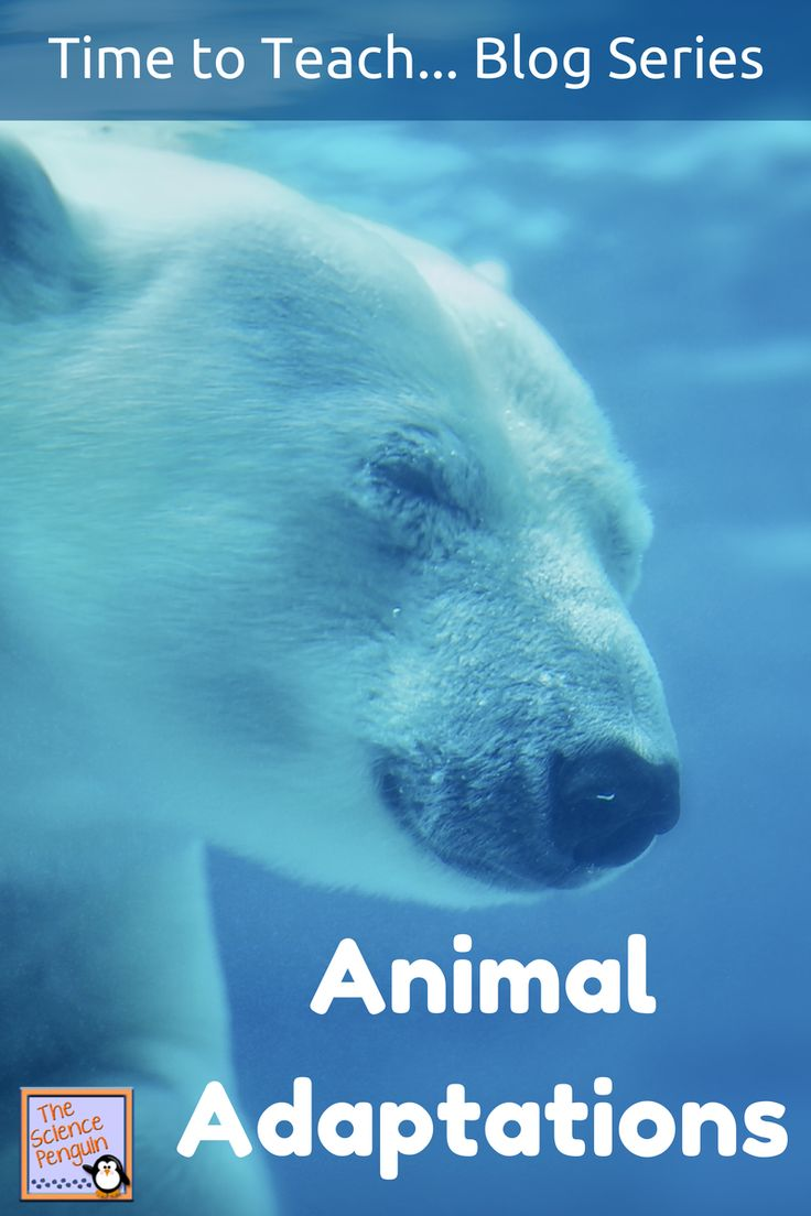 Time to Teach: Animal Adaptations {Ideas, Anchor Charts, Video Clips, Notebook Entries, and Stations--includes free and paid resources}