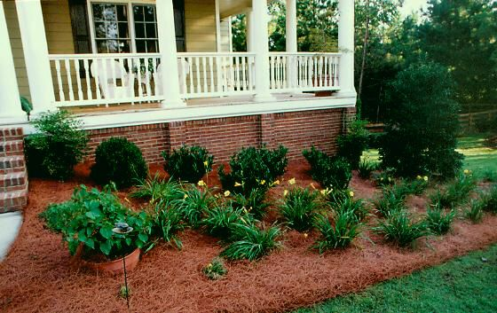 Use Those Annoying Pine Needles You Raked Up For Mulch