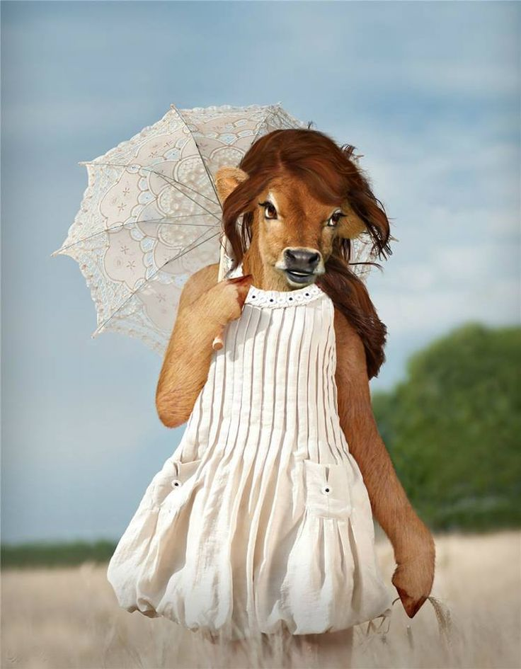 cow girl - Arte de Blueorb by Desafios Photoshop Brasil