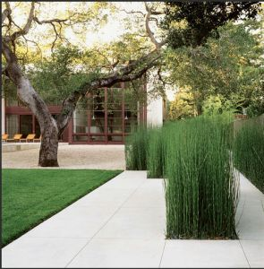 hard landscaping punctuated by grasses at Brookvale Residence by Andrea Cochran Landscape-this would be a good thing to do on a cement patio, say around a pool area, to offer some privacy as well Equisetum architectural plant