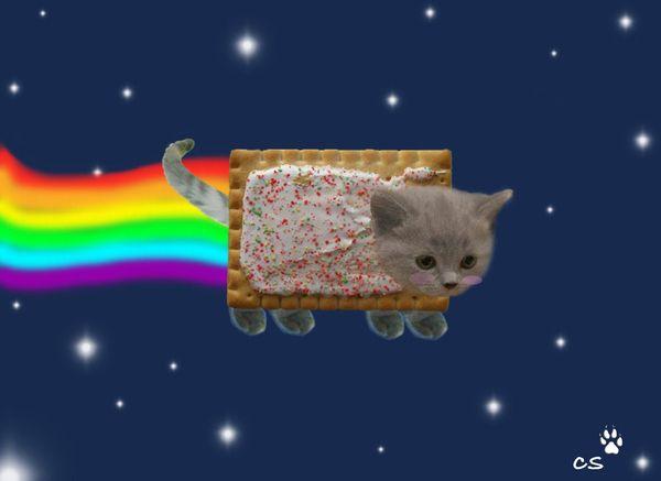 Real Life Nyan Cat!!